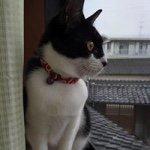 kana.nagahashiさんのクローゼット